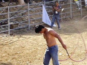 Contestant perform in the bull whipping contest.